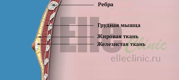 строение-мужской-груди1